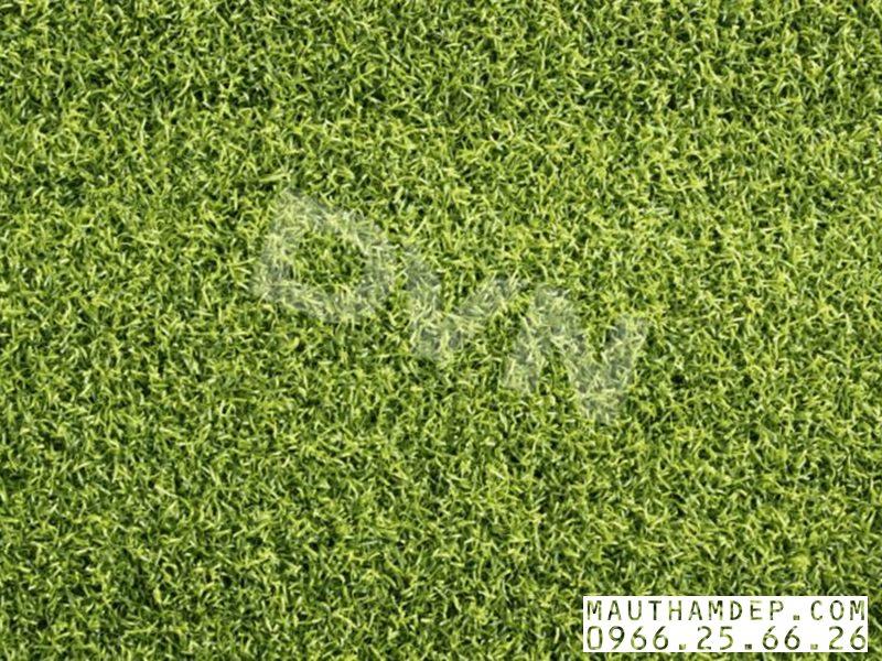 Lớp mặt cỏ nhân tạo cho Sân Golf